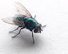 fly (adj)